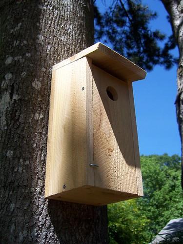 wood bird house