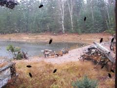 Winter Cabin: End of Season