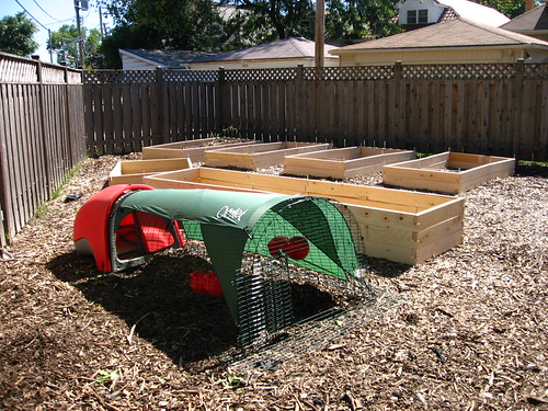 My hens live in an Eglu, which is a stylish and convenient coop and run for keeping up to 3 standard-sized chickens.