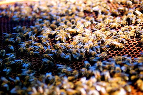 photo cadre de ruche