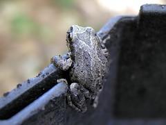 froggie3