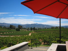 Coppola wines terrace view