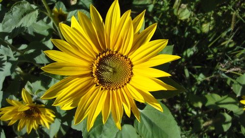Farbe bekennen - gelb