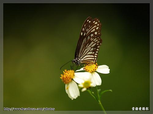 butterfly_03.jpg