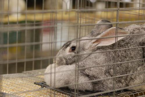 This bunny bites!