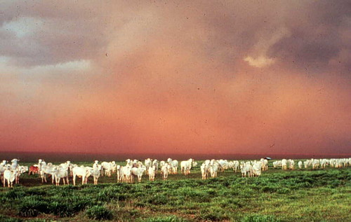 Red sky over Maasai rangeland