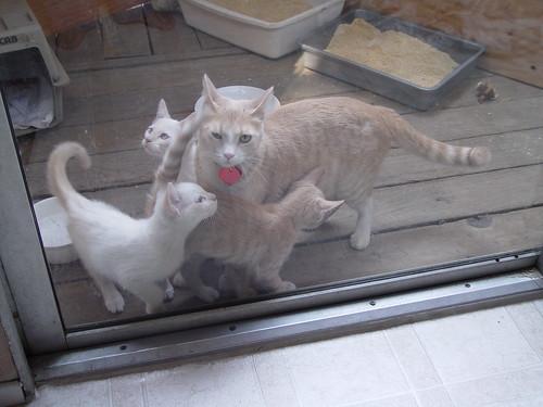 Kittens rubbing against Nutmeg