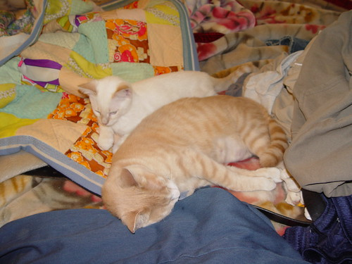 Cats on bed.