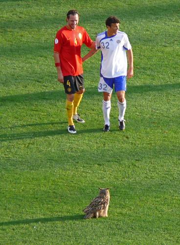 Eagle owl attending soccer game pt. 2