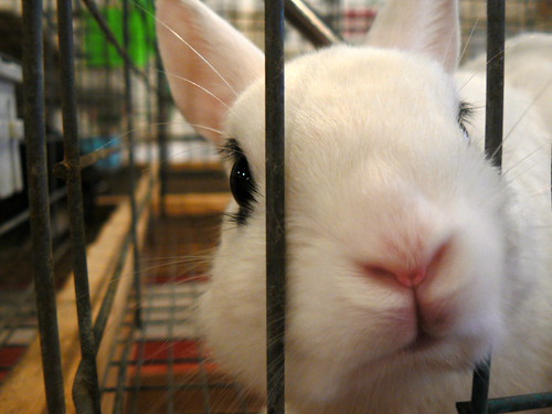 Sorry, emo bunny, I don't have food for you