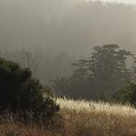 "Afternoon Fog <a style=""margin-left:10px; font-size:0.8em;"" href=""http://www.flickr.com/photos/36521966868@N01/815396656/"" target=""_blank"">@flickr</a>"