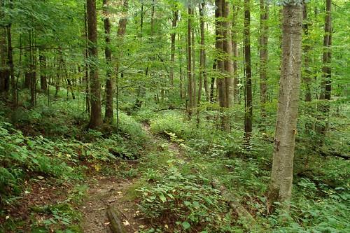Blacksnake Hiking Trail