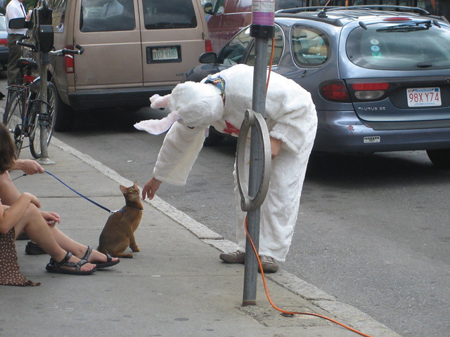 cat on a leash. man in a bunny suit