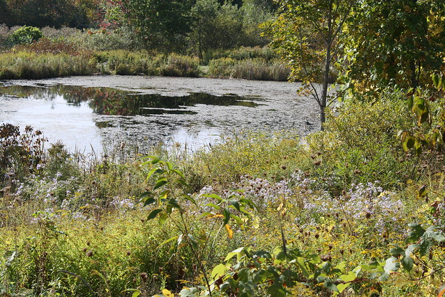 green pond