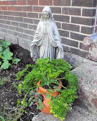 Mary with herbs