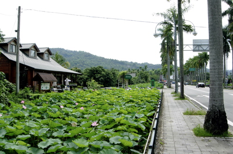 Lotus Pond1