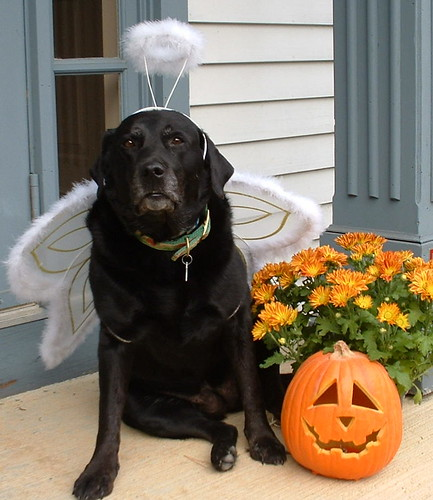 Halloween Angel