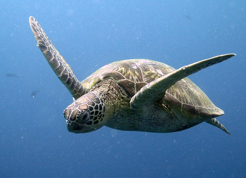 sea turtle image nested complexity accelerated learning