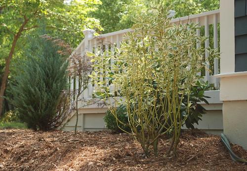 plantings beside rear deck