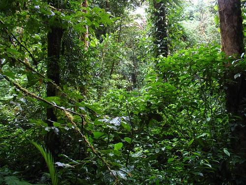 A jungle or...