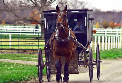 Amish Buggy Ride