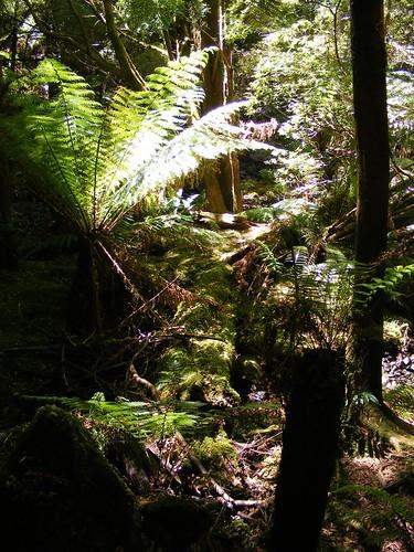 2008_0106australia20357