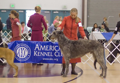 Hound Group Competition