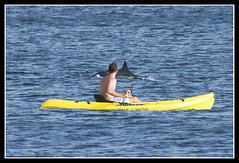 Dolphin Kayak Tours