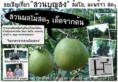 Poster_Fruit_Graden_outline