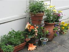 plantstuff