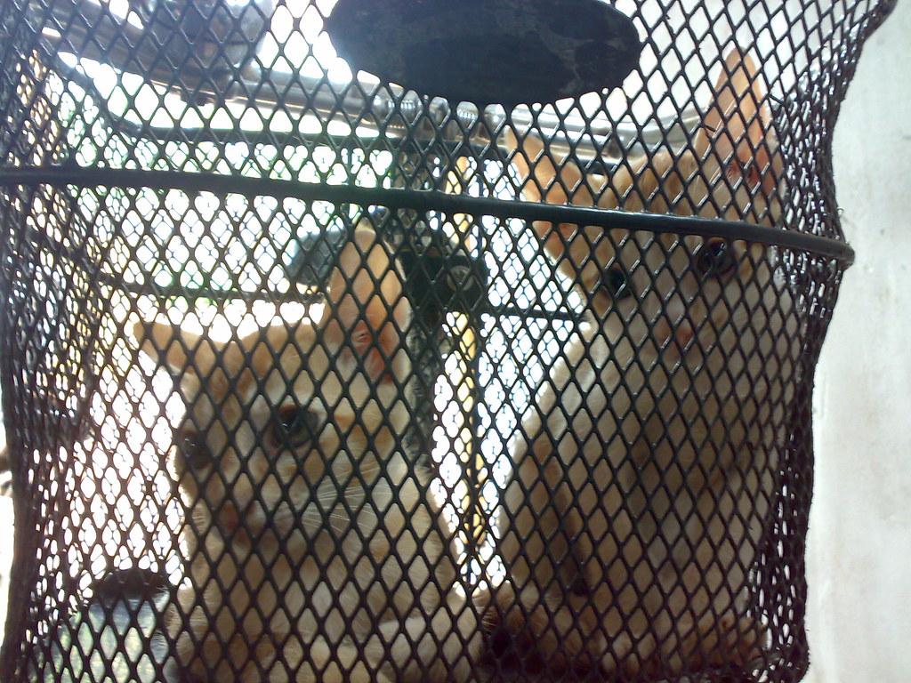 Cute Kittens // கூடைக்குள் குட்டிகள் II