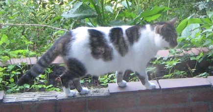 guardian cat on the wall in the garden