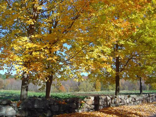 Baker Bridge Road, Lincoln, MA
