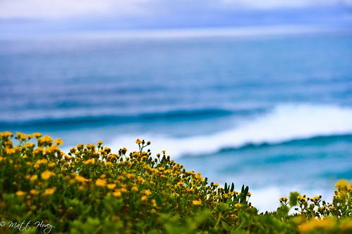 coastal flowers by Matt Hovey