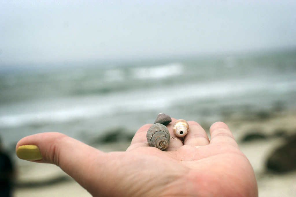 I found some shells
