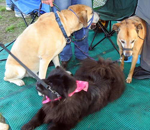 THE WHOLE CREW UNDER THE TENTS AT THE DOG SHOW