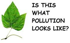 Kudzu Causes Air Pollution