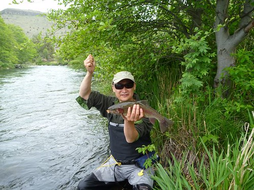Deschutes River Redside with Salmonfly in his Grill