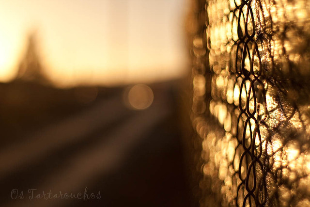 the golden fence