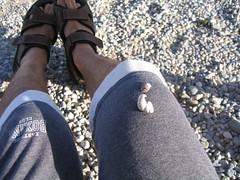 A caccia di conchiglie in riva al lavo