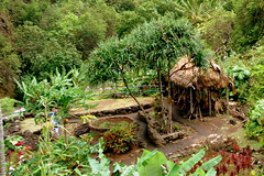 Traditional Hawaiian Garden