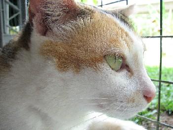 Chrissy_20070929_04x