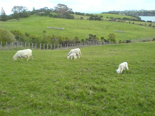 Mint Sauce Catchers