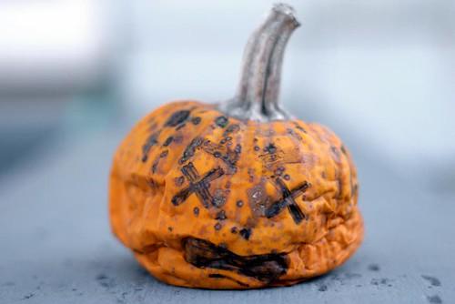 September 29: Gary, Come Get Your Pumpkin, It's Finally Ready!