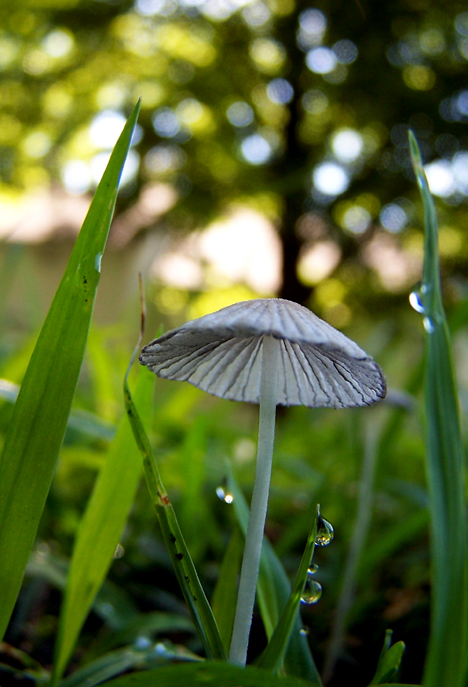 Mushroom at Morning