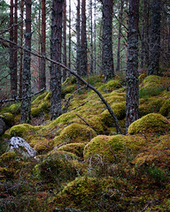 "Rothiemurchus Forest II • <a style=""font-size:0.8em;"" href=""http://www.flickr.com/photos/26440756@N06/5156063202/"" target=""_blank"">View on Flickr</a>"