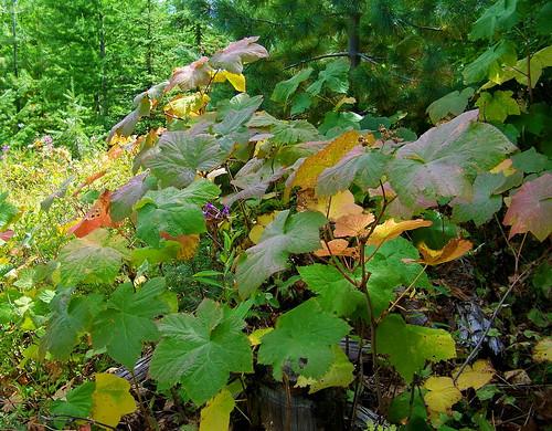 Nature's leaf garden