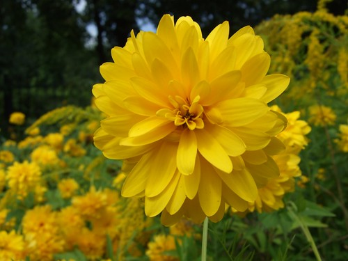 Big yellow flower on Flickr