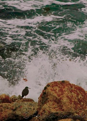 Watching The Splashing