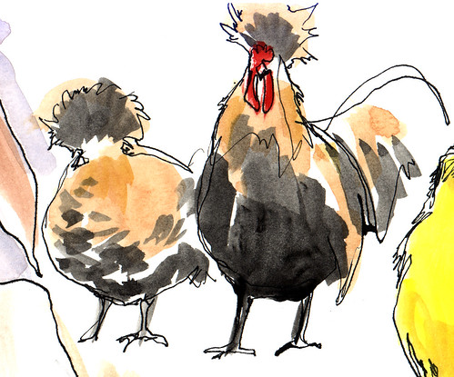 The chickens.